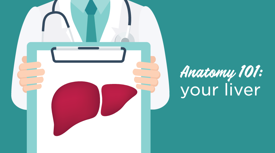 Anatomy 101: your liver (infographic)