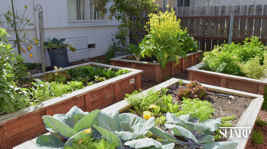 Sharp Coronado organic garden feeds and inspires