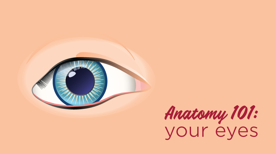 Anatomy 101: your eyes (infographic)