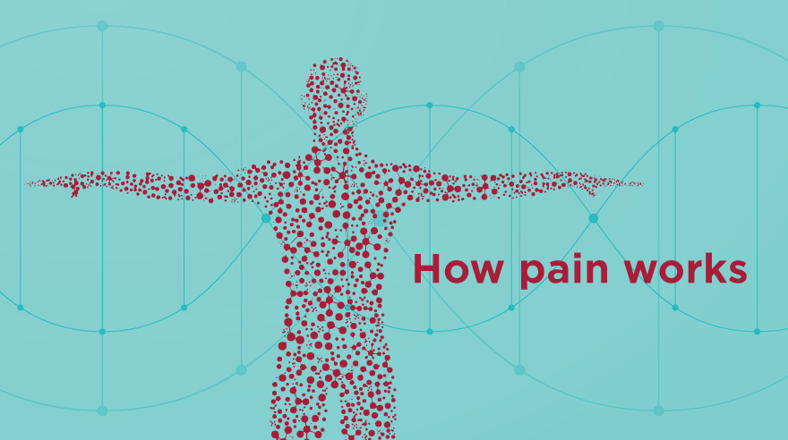 How pain works (infographic)