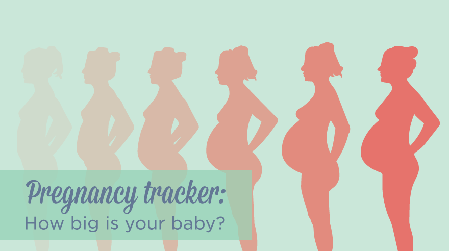 Pregnancy tracker infographic