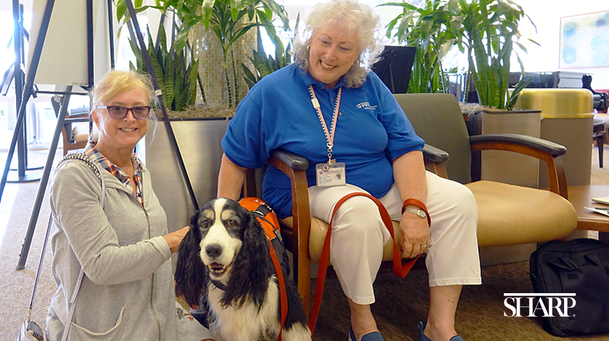 Meet Bailey, the therapy dog