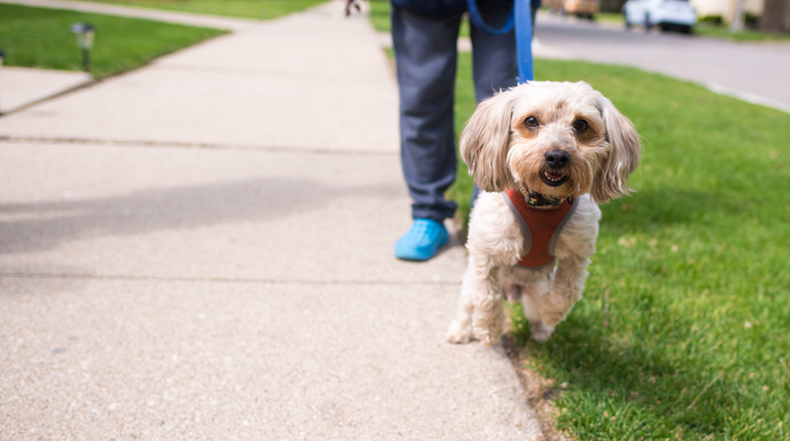 Helping older dog owners avoid injury