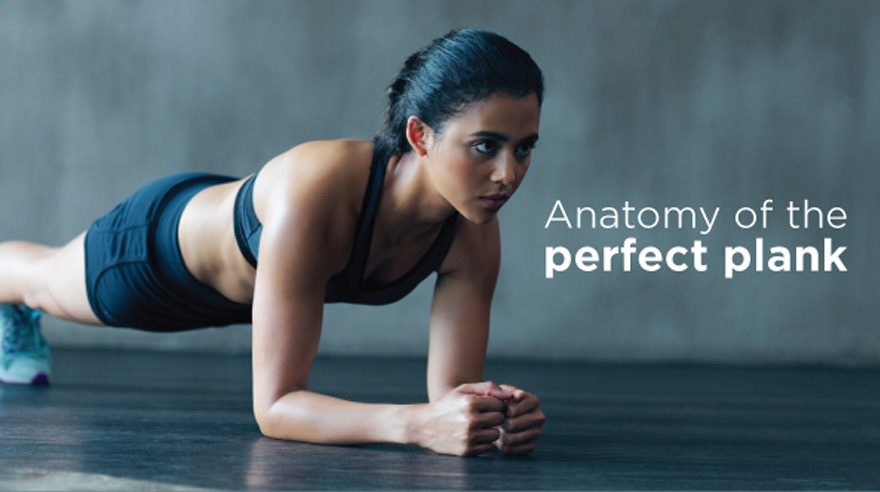 Anatomy of the perfect plank teaser image