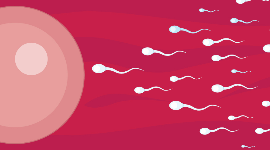 Tips for boosting sperm quality